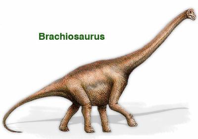Le brachiosaure brachiosaurus dinomania dinomania for Longueur d un court de tennis